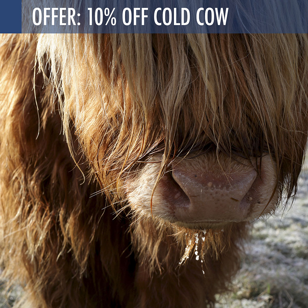 Cold Cow offer