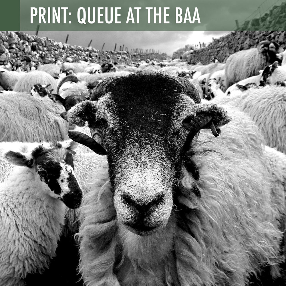 Queue At The Baa promo